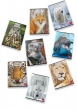 PIGNA füzet, A4, 32 lapos, Animal World, kockás